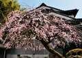 Yamanobe01_0127