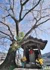 Yamashirok0312