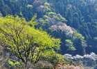 Ujigawa01_0113