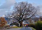 Touji20121_003