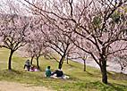 Shunbun501_01