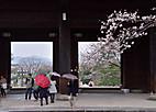 Yasaka201_2