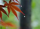 Shousho701