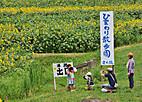Himawari403