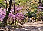 Konosyama101_02