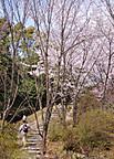 Konosyama301_01