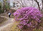 Konosyama401