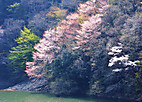 Ujigawa201_02