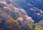 Ujigawa301_02