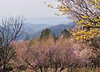 Ujigawa902