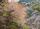 Ujigawasak601_01