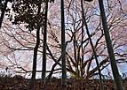 Sakuraterada201_01