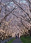 Sakuraterada701_01