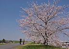 Sakurakintetu101