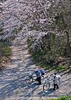 Sakurakintetu102