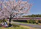 Sakurakintetu202