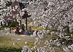 Sakurakintetu301_01