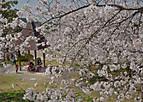 Sakurakintetu302