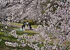 Sakurakintetu401