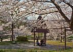 Sakurakintetu401_01