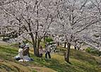 Sakurakintetu402