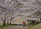 Sakurakintetu601