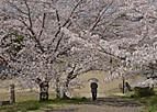 Sakurakintetu602