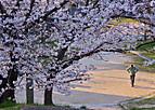 Sakurakintetu702