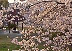 Sakurakintetu703