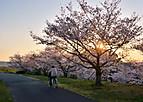 Sakurakintetu802