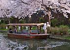 Fusimisakura301