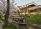 Fusimisakura402